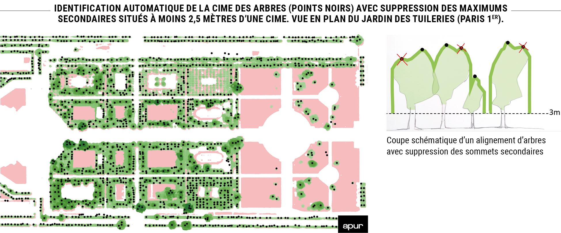 Identification automatique de la cime des arbres (points noirs) avec suppression des maximums secondaires situés à moins 2,5 mètres d'une cime. Vue en plan du Jardin des Tuileries (Paris 1er). © Apur