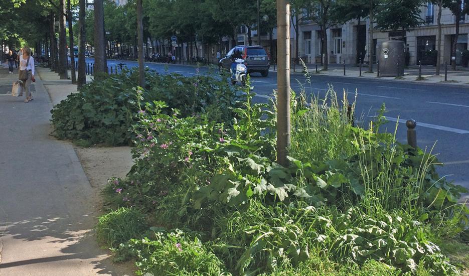 Pieds d'arbres végétalisés à Paris, Bd Raspail (14e) © Apur
