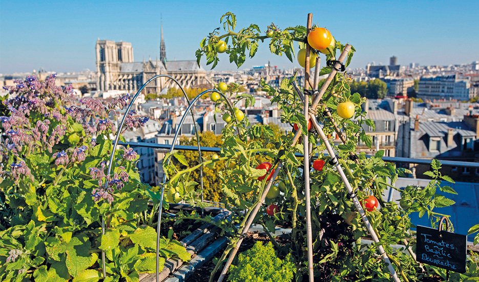 Vegetable garden of Yannick Alléno's restaurant Terroir Parisian, on the roof of the Maison de la Mutuallité, Paris 5th district © MEIGNEUX-SIPA
