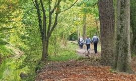 Promeneurs dans le bois de Vincennes © Apur – JC Bonijol